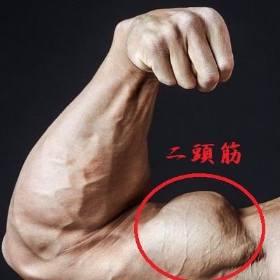 筋トレ鍛えたい腕の筋肉4種!!
